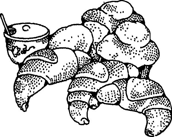 Gambar Mewarna Croissant