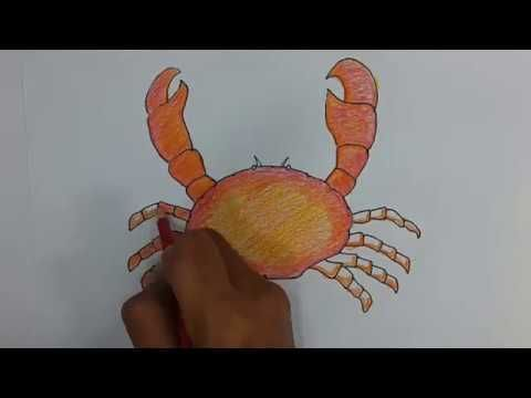cara menggambar dan mewarnai kepiting