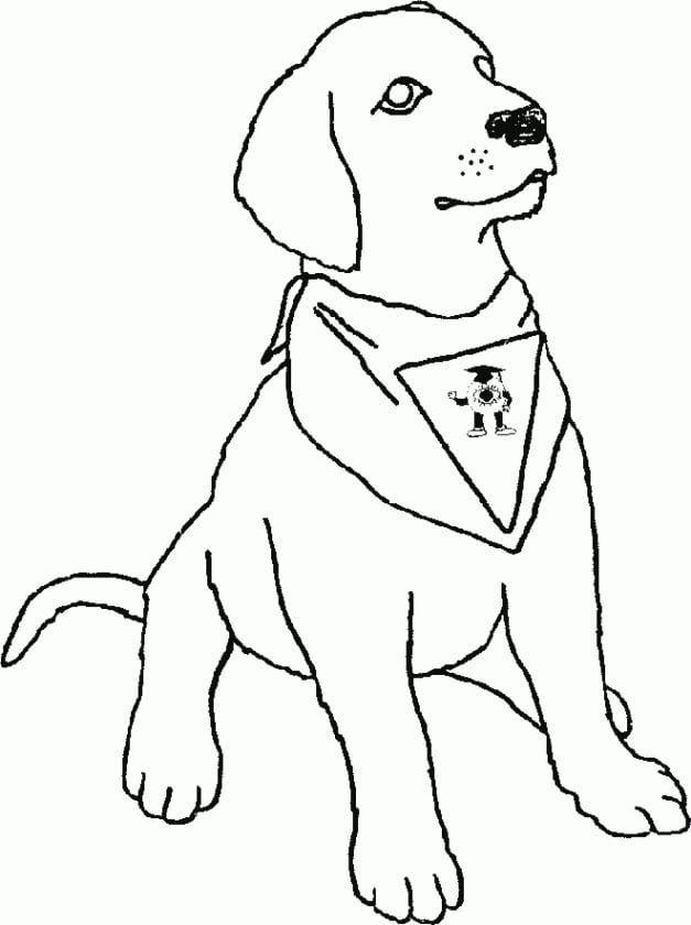 95+ Gambar Mewarnai Binatang Anjing Gratis Terbaru