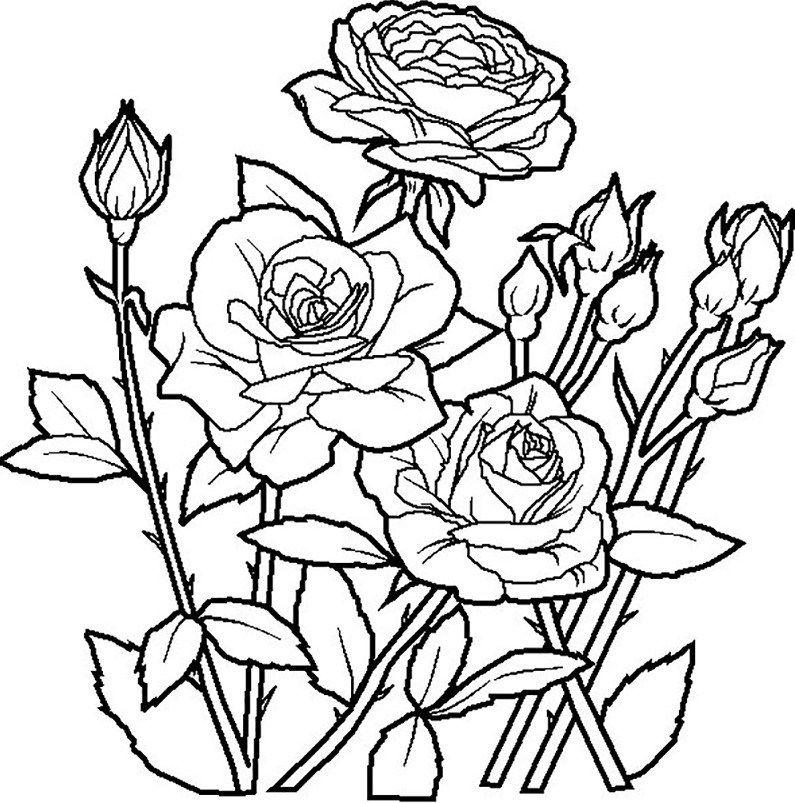Download Bermacam Contoh Gambar Mewarna Bunga Bungaan Yang Berguna