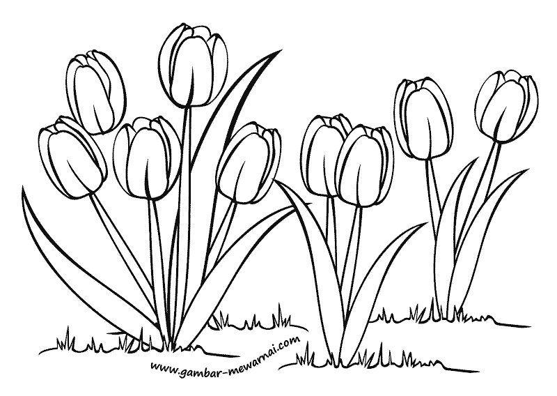 Muat Turun Bermacam Contoh Gambar Mewarna Bunga Tulip Yang Power Dan Boleh Di Dapati Dengan Cepat Gambar Mewarna