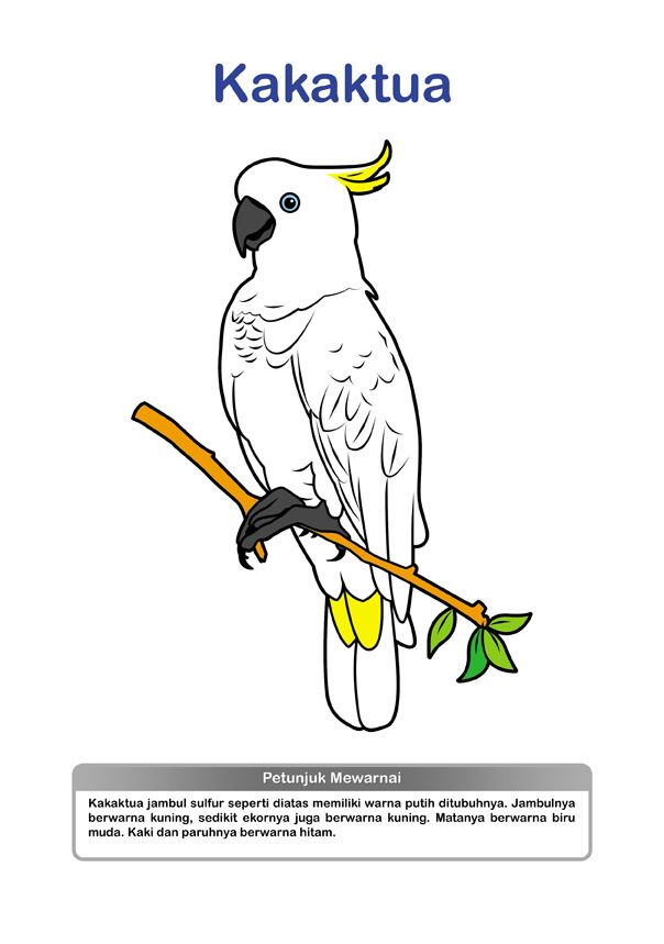 Gambar Mewarna Burung Baik Penerbit Kreasi Pustaka Mewarnai Burung