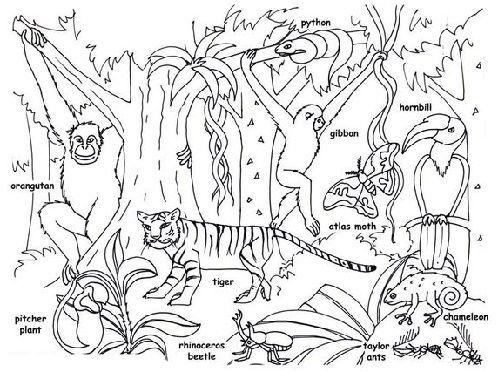 Gambar Mewarna Haiwan Di Hutan Power Gambar Mewarna Haiwan Di Zoo Brad Erva Doce Info