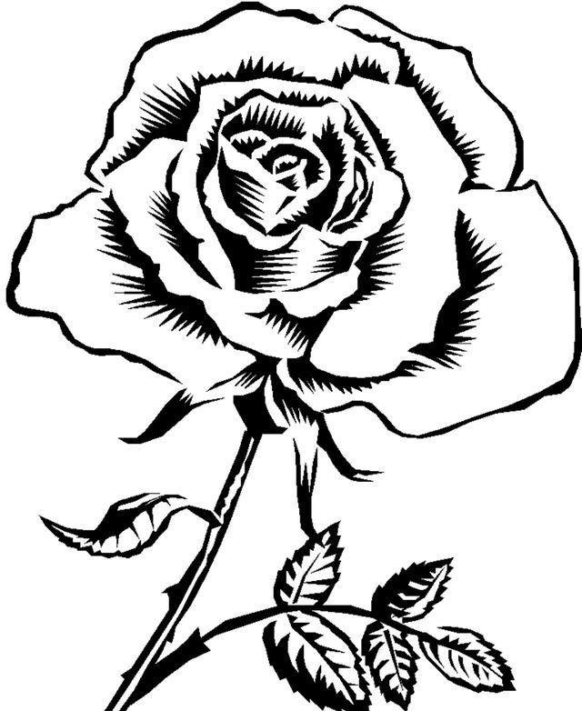 Contoh Gambar Bunga Mawar Hitam Putih Simak Gambar Berikut