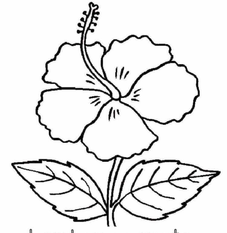 93 Gambar Ilustrasi Taman Bunga Kekinian Gambar Pixabay