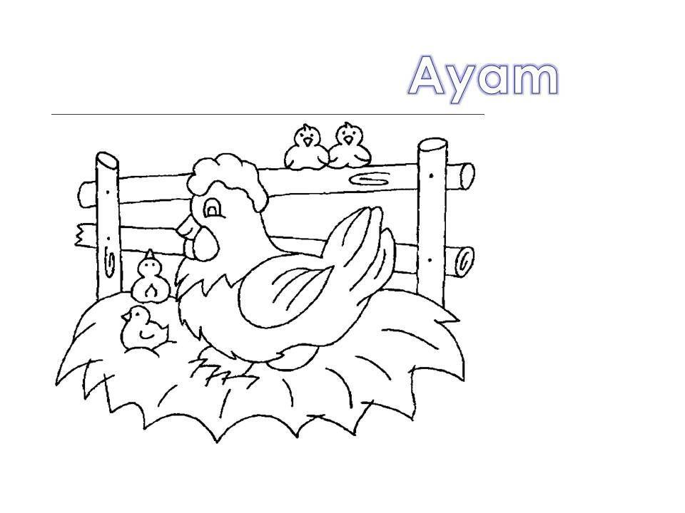 gambar mewarna ayam terbaik kelas bunga raya pemulihan khas mari mewarna