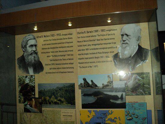 Poster Penelitian Bernilai tokoh Evolusi Charles Darwin Wallacea Generasi Penerusnya Di