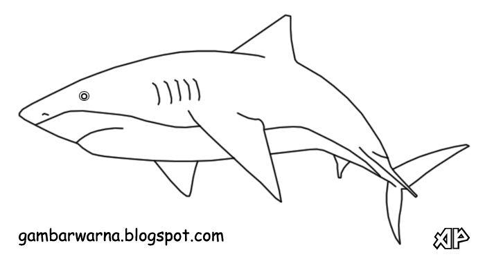 Gambar Ikan Untuk Mewarna Meletup Mewarnai Ikan Hiu Belajar Mewarnai Gambar