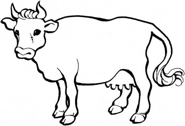 Gambar Lembu Untuk Mewarna Menarik Mewarnai Gambar Lembu V Warna