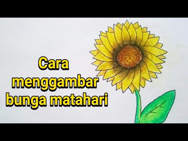 Gambar Mewarna Bunga Matahari Bernilai Cara Menggambar Dan Mewarnai Bunga Matahari Unduh Gambar Terbaik