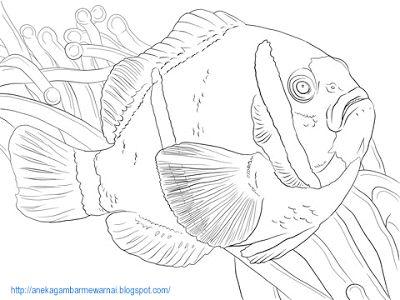Gambar Pemandangan Dasar Laut Untuk Mewarna Baik Aneka Gambar Mewarnai Gambar Mewarnai Ikan Di Laut Untuk Anak Paud