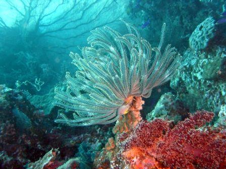 pemandangan dasar laut cetek