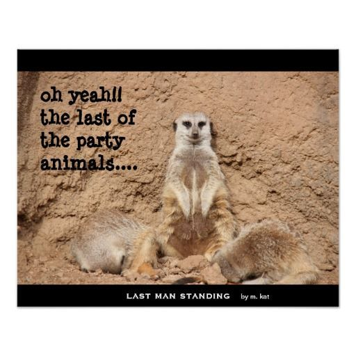 last man standing by m kat funny meerkat art poster depicting the epitome of a party animal