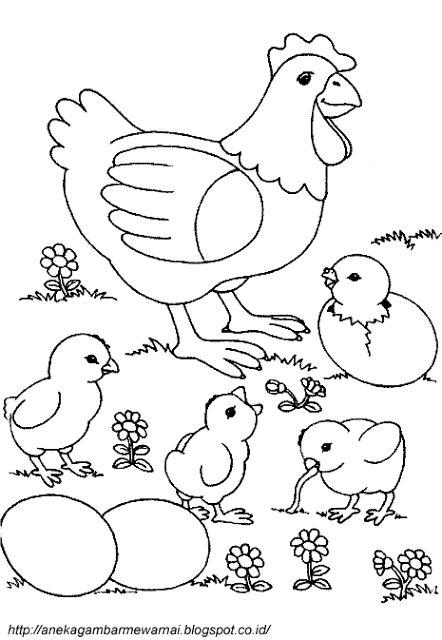 Link Download Pelbagai Contoh Gambar Ayam Untuk Mewarna Yang Bermanfaat Dan Boleh Di Perolehi Dengan Segera Gambar Mewarna