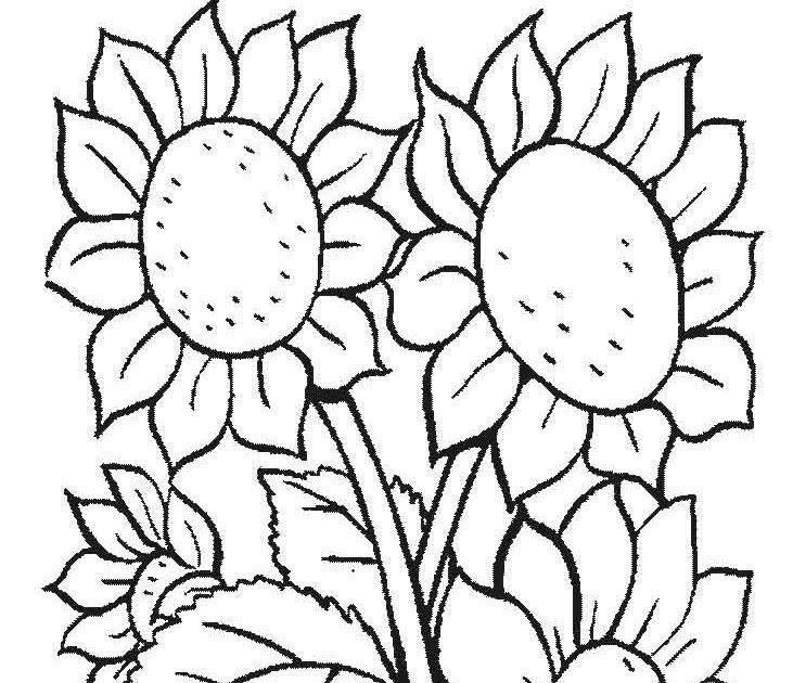 contoh mewarnai gambar contoh mewarnai pada matematika diskrit mewarnai bunga matahari alamendah s blog via alamendah
