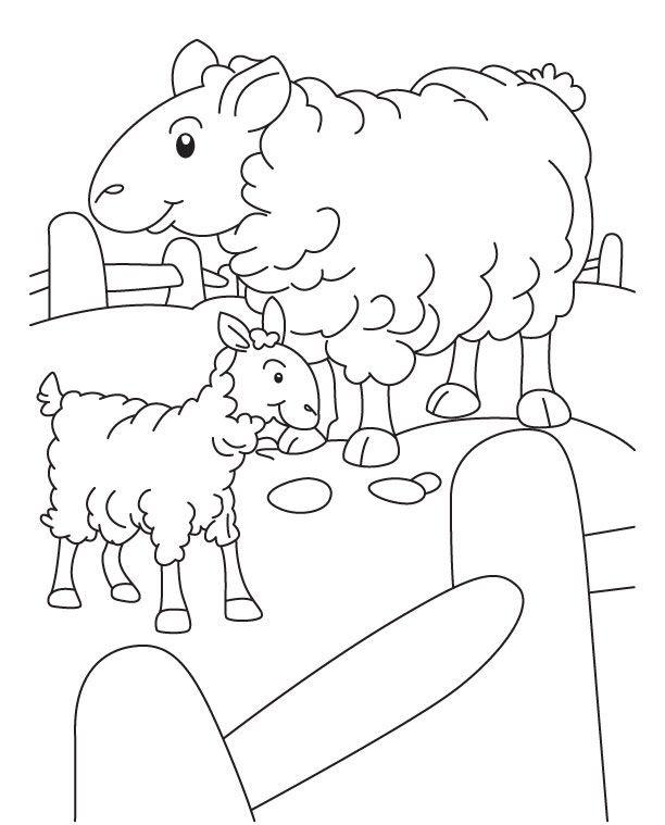 Gambar Mewarna Daging Lembu Hebat A 14 Gambar Mewarnai Domba Untuk Tk Paud Sd Marimewarnai Com