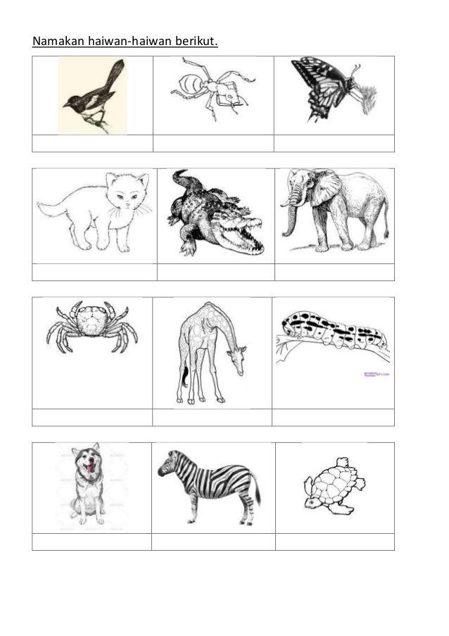 Jom Download Pelbagai Contoh Gambar Mewarna Haiwan Jinak Yang Awesome Dan Boleh Di Muat Turun Dengan Cepat Gambar Mewarna