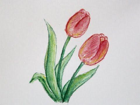 Gambar Mewarna Pensel Baik Cara Menggambar Bunga Tulip Dengan Pensil Warna Youtube