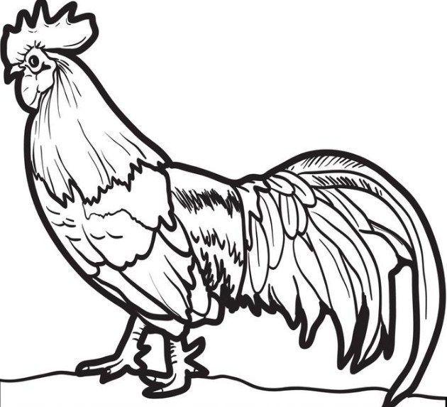 gambar mewarna ayam hebat gambar ayam belajar mewarnai gambar mania of himpunan gambar mewarna ayam yang