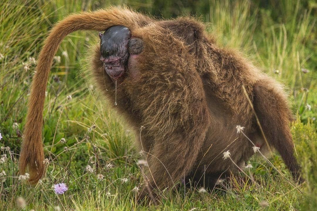 demorei um pouco para descobrir o que era isso acolhendo um novo macaco