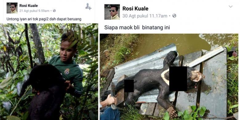 Gambar Beruang Baik Pria Ini Dicari Karena Unggah Foto Beruang Madu Terbunuh Di Facebook