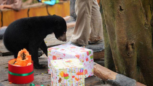 foto ulang tahun rika si beruang madu di kebun binatang bandung