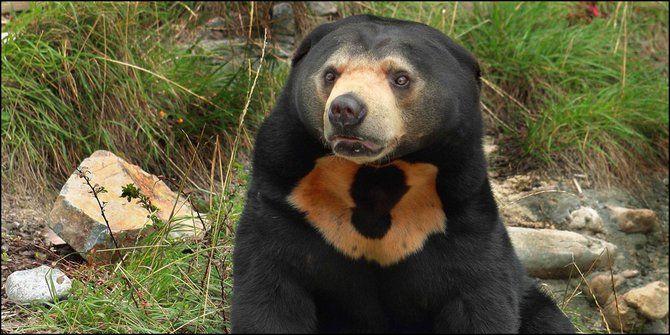 pamer foto sembelih beruang madu di fb pria ini dihujat
