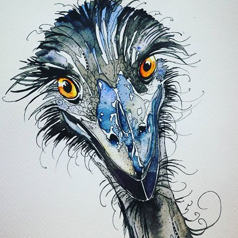 poster burung emu penting images about emu on instagram