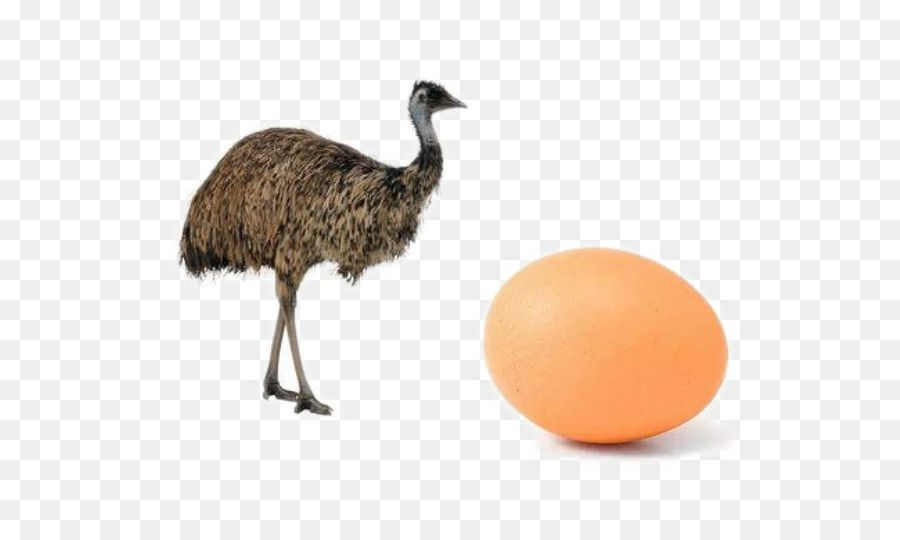 kisspng common ostrich bird emu cassowary duck brown ostrich eggs 5a961c28b2d649 0460048715197870487325 jpg