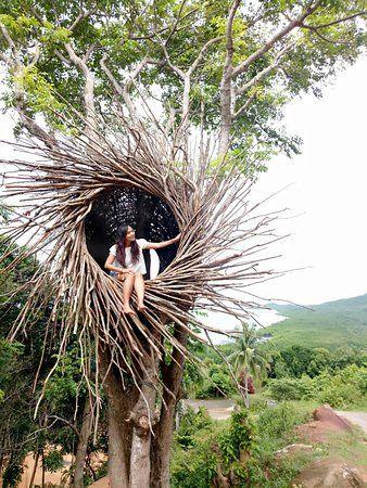 karimunjawa love hill spot buatan berbentuk sarang burung diatas pohon