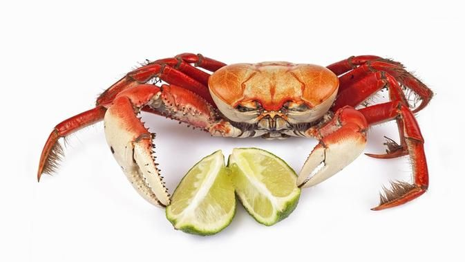 cara membersihkan kepiting agar tidak keracunan siap untuk dimasak lifestyle liputan6 com