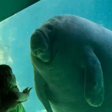 jelek amat sih nama geng lu dugong