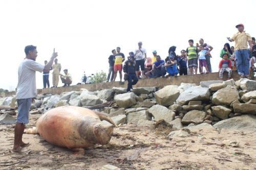 ia mengatakan nelayan sekitar mengira dugong tersebut merupakan anjing laut namun setelah dilakukan pengecekkan oleh petugas dikonfirmasi bahwa itu