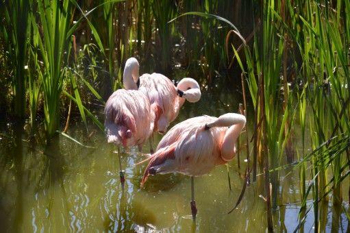 air alam burung bunga kolam margasatwa