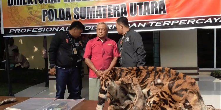 Gambar Harimau Dahan Meletup Penjual Kulit Harimau Dan Macan Langka Diringkus Polda Sumut