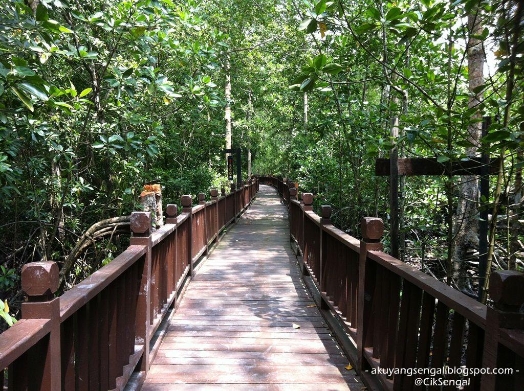 Gambar Kelawar Bakau Menarik Pontian Day Trip Pulau Kukup Tanjung Piai Aku Yang Sengal