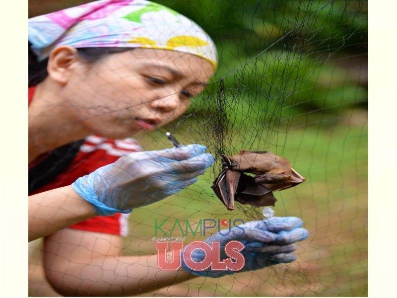 kelawar merupakan satu satunya keluarga mamalia yang mampu terbang seperti burung kerana kaki hadapannya yang dilengkapi kulit tambahan yang berfungsi