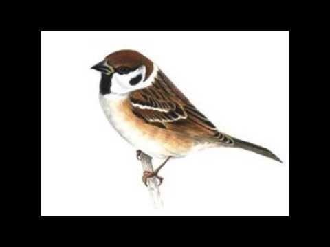 Gambar Mewarna Burung Bangau Hebat Lukisan Burung Pipit Youtube