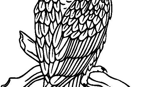 510+  Gambar Burung Hantu Sketsa HD Paling Bagus Gratis