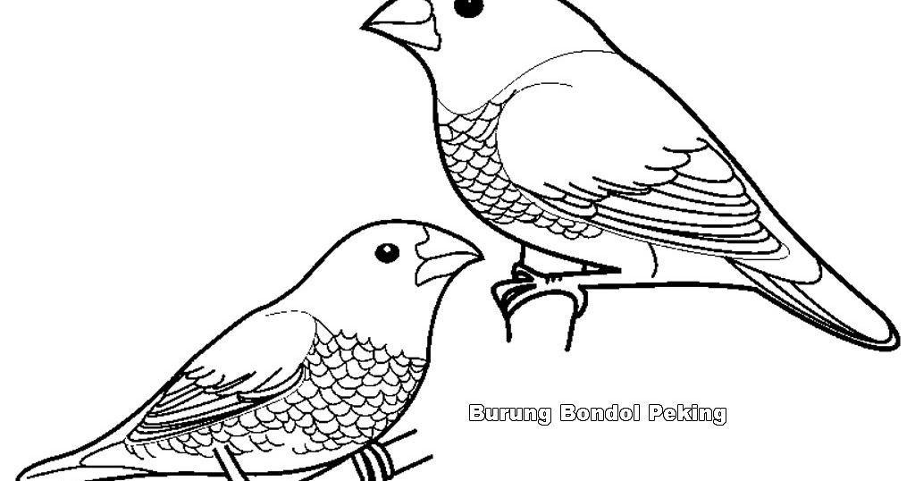 mewarnai gambar burung bondol peking jpg