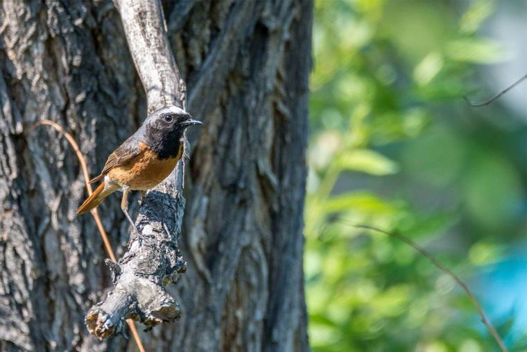 Gambar Mewarna Burung Pipit Berguna Burung Burung Di Wilayah Kemerovo Dunia Binatang Di Wilayah Kemerovo