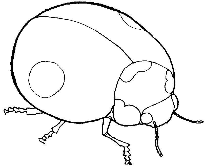 gambar serangga untuk mewarna bermanfaat laman informasi prasekolah gambar untuk tema serangga
