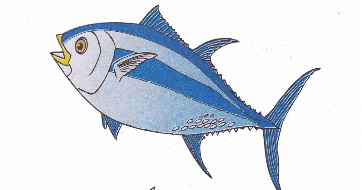 Gambar Mewarna Ikan Tuna Penting Gambar Mewarnai Ikan Tuna Untuk Anak Paud Dan Tk