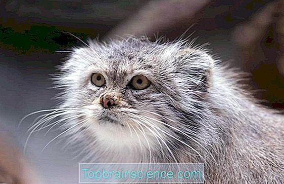 Gambar Mewarna Kelawar Telinga Pendek Terhebat Petua 1 Apa Haiwan Menukar Warna Lain Lain 2019
