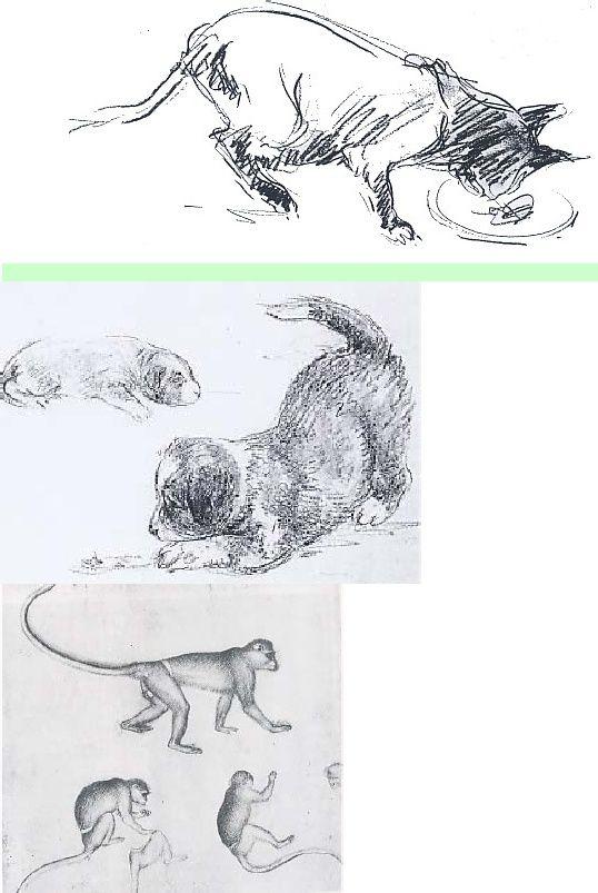 Download Himpunan Contoh Gambar Mewarna Kucing Dahan Yang Power Dan Boleh Di Download Dengan Mudah Gambar Mewarna