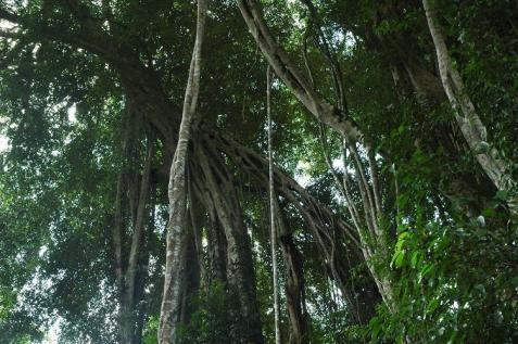 saya mengamati kerimbunan dan kehijauan yang membentuk hutan hujan tropika itu hutan unik yang merangkumi hanya enam peratus dari kawasan daratan di planet