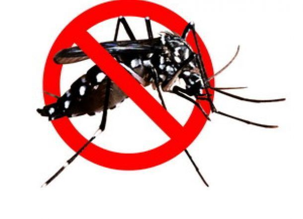 buat rumah anda terhindar dari nyamuk demam berdarah begini caranya