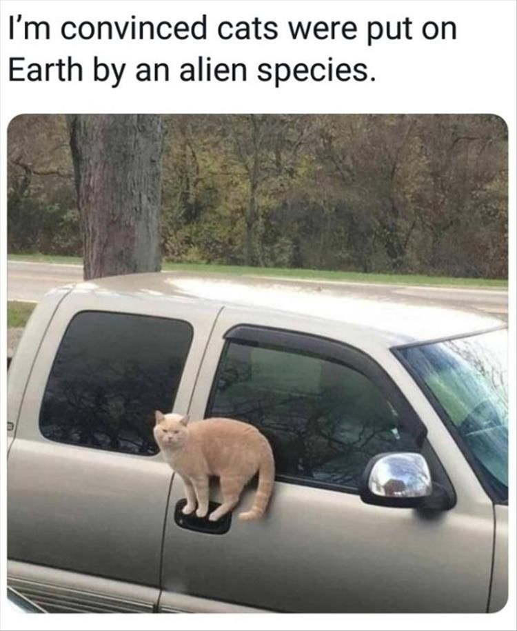 funny animal memes of the day 25 pics