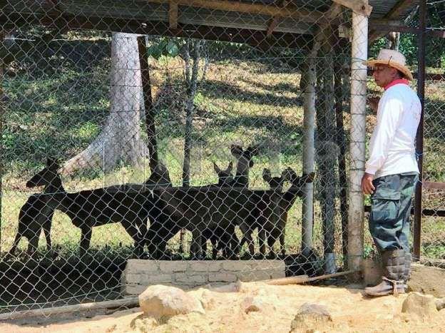 a man in a cage at a zoo mohd zaid melihat rusa ternakannya foto