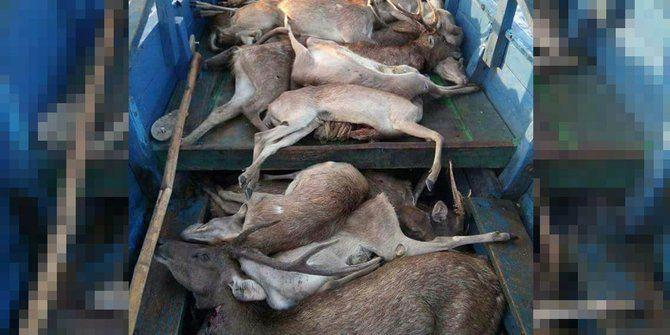 viral foto rusa mati taman nasional komodo bentuk tim investigasi